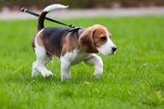 Выгул собаки (не крупной пароды)